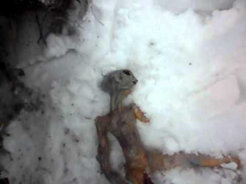 Alieno ritrovato morto in Russia