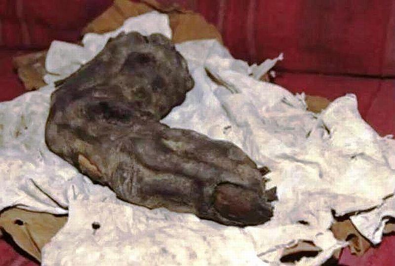 Dito gigante mummificato ritrovato in Egitto.